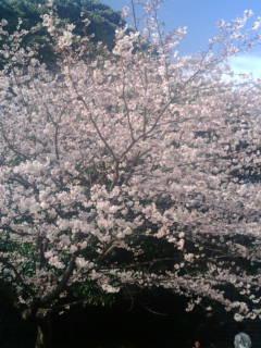 桜を見に行ったよ